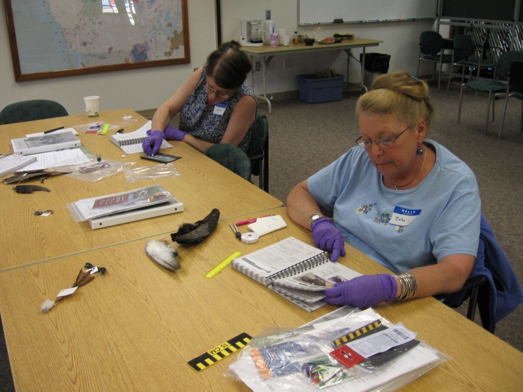 Ellie and Babs work to key out birds from the teaching collection
